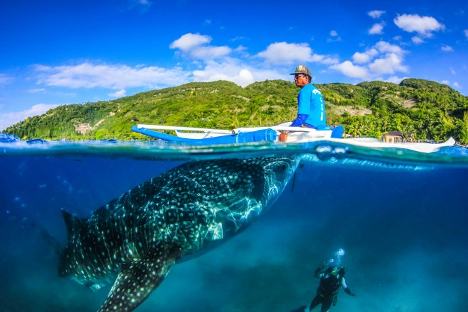 Whale Shark, Fisherman and SCUBA diver_shutterstock_185719748