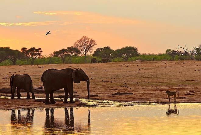 zimbabwe_elefanti_lucio_rossi