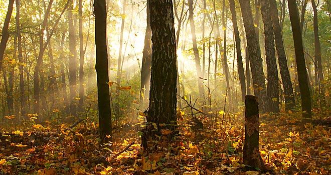 autunno_new_england