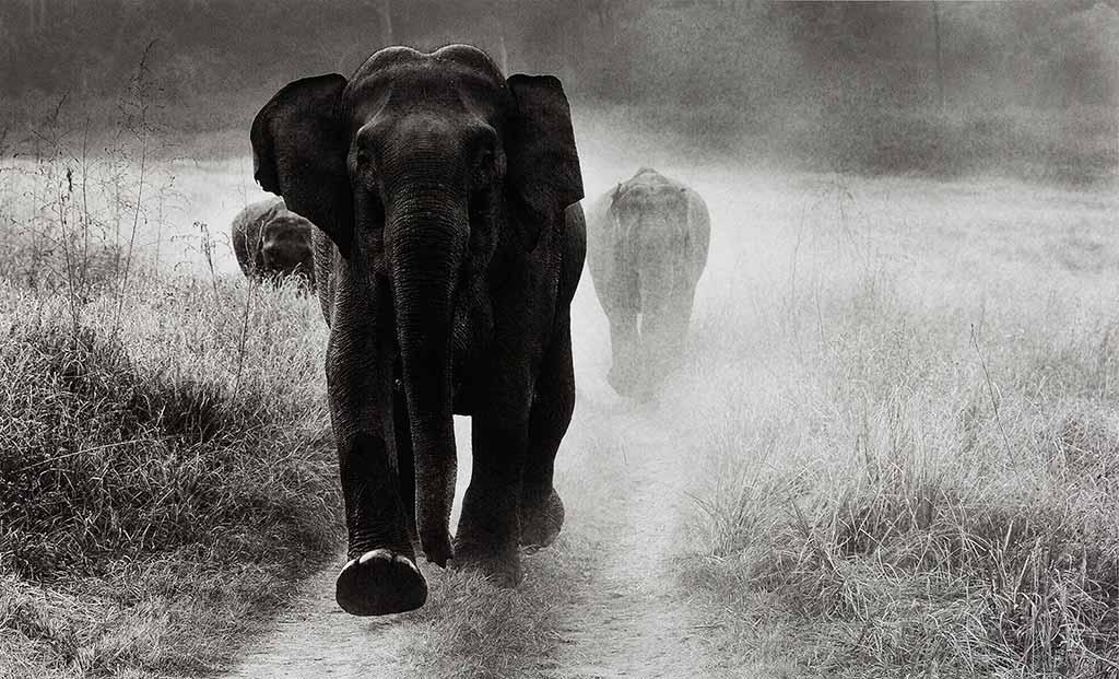 bangalore-museum-of-photography-elefanti