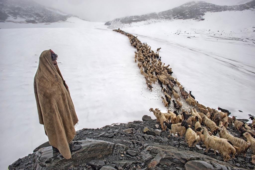 The Long March Home Himachal – Pradesh - India Photo © Sankar Sridhar (India)
