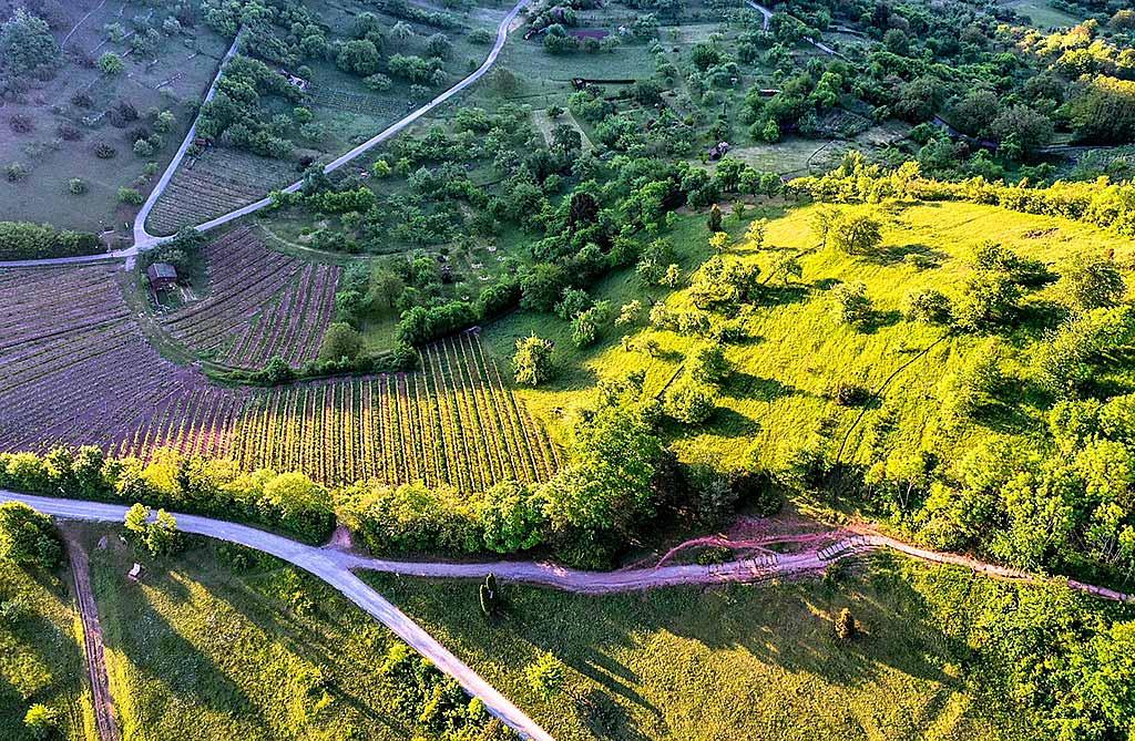 cammino-portoghese-tra-colline-e-vigneti