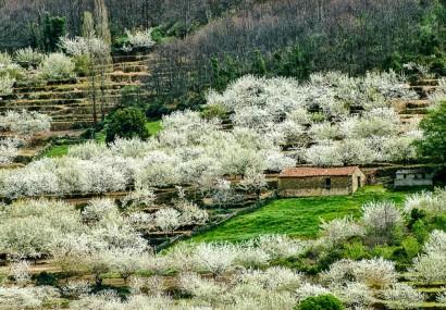 La collina dei ciliegi nella Valle del Jerte