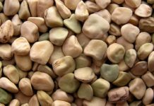 cicerchia-legume
