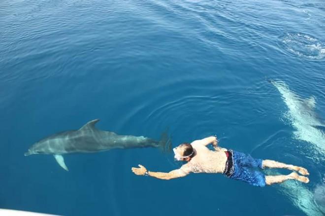 delfini Golfo Aranci