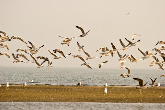 Gabbiani in volo nel Parco regionale del Delta del Po