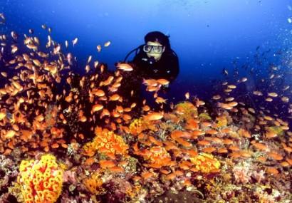 Filippine full immersion