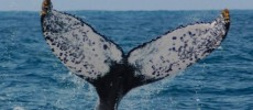 Sulla scia di Moby Dick: 6 siti dove avvistare i grandi cetacei