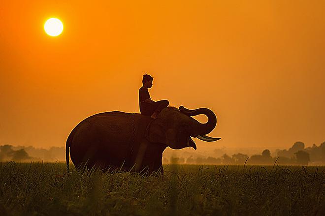 elefante_risaie_tramonto