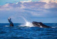 balena-massachusetts-whale-watching