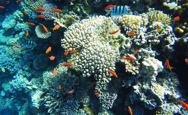 fondali del Mar Rosso