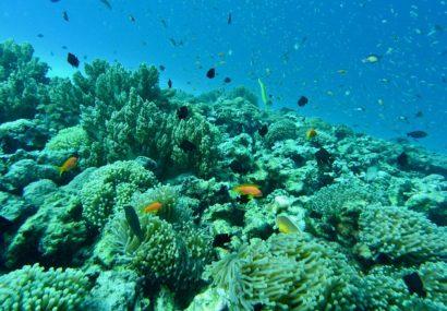 Hawai e Bonaire contro le creme solari dannose per l'ambiente