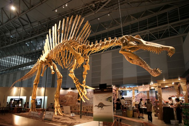•Esposizione spinosaurus. Fotografia di kabacchi via Flickr CC