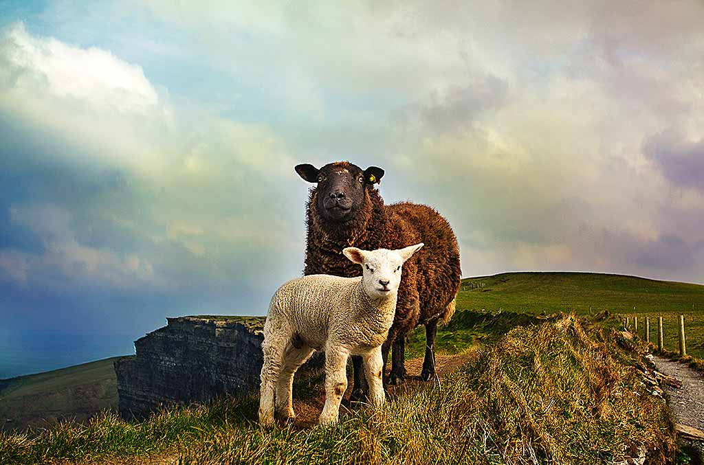 CliffCliffs-Moher-Liscannor-Irlanda