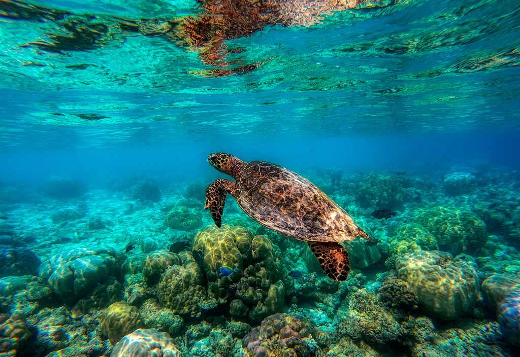 maldive-tartaruga-mare