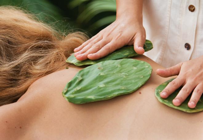massaggio-cactus