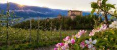 Trentino,  a piedi o in bicicletta fra le valli fiorite