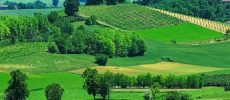 Weekend goloso tra i castelli del Monferrato