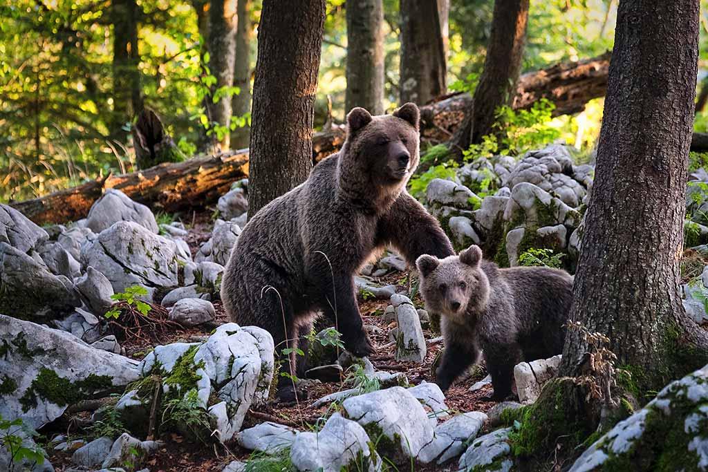 orso-marsicano-parco-nazionale-abruzzo