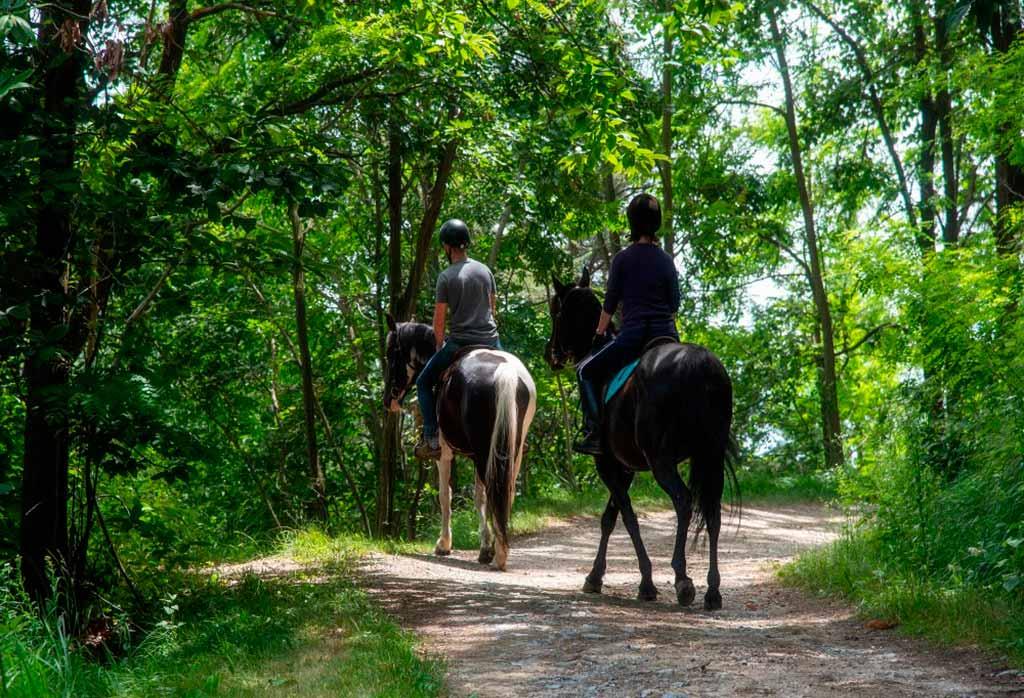 roero-piemonte-cavallo-passeggiata