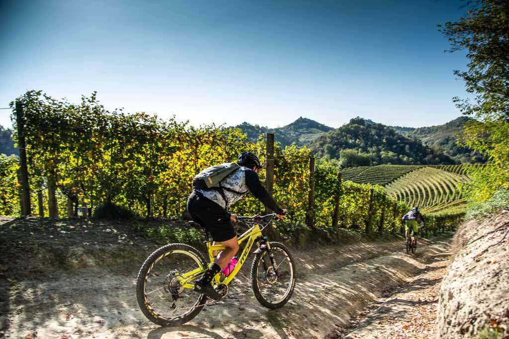 roero-piemonte-biciclette-in-vigneto