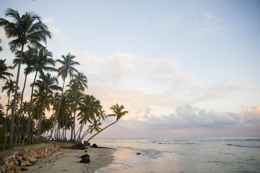 caraibi estate