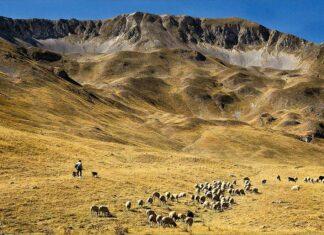 pietracamela-abruzzo-gregge-al-pascolo