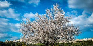 sicilia-primavera