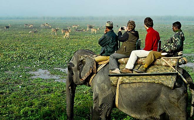 safari_kaziranga