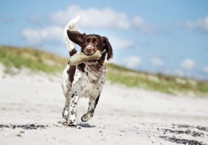 Spiagge per cani Italia. Vacanze bestiali