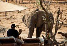 zimbabwe_parco_hwange